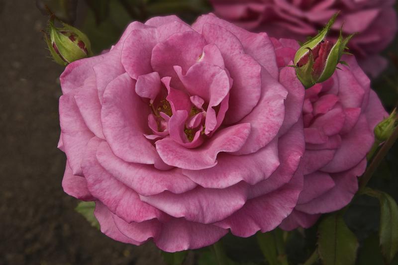 """фото """"Цветочная 71."""" метки: природа, цветы"""