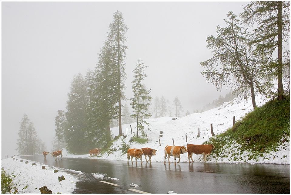 "photo ""Natural cataclysm"" tags: landscape, nature, mountains, pets/farm animals"