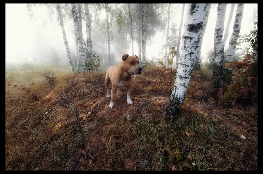 """фото """"Бугор"""" метки: пейзаж,"""
