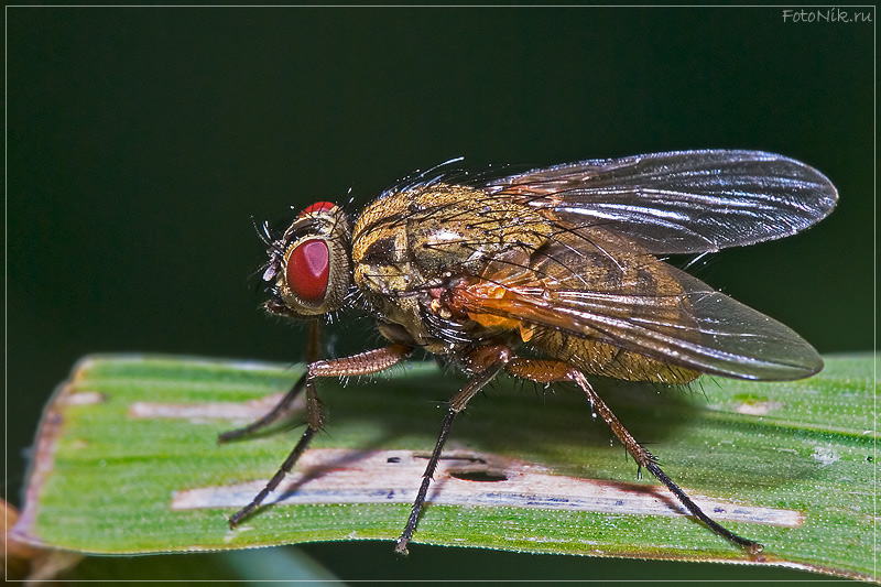 "photo ""At the start position"" tags: nature, misc., insect"