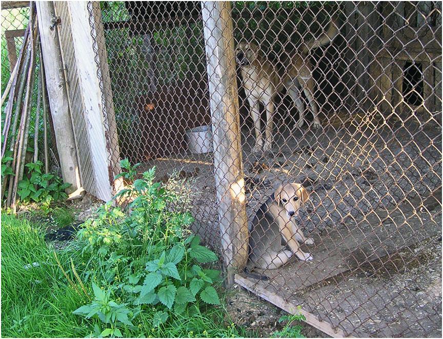 """фото """"Не пускают... из серии """"Деревня"""""""" метки: природа, репортаж, домашние животные, собака, собаки"""