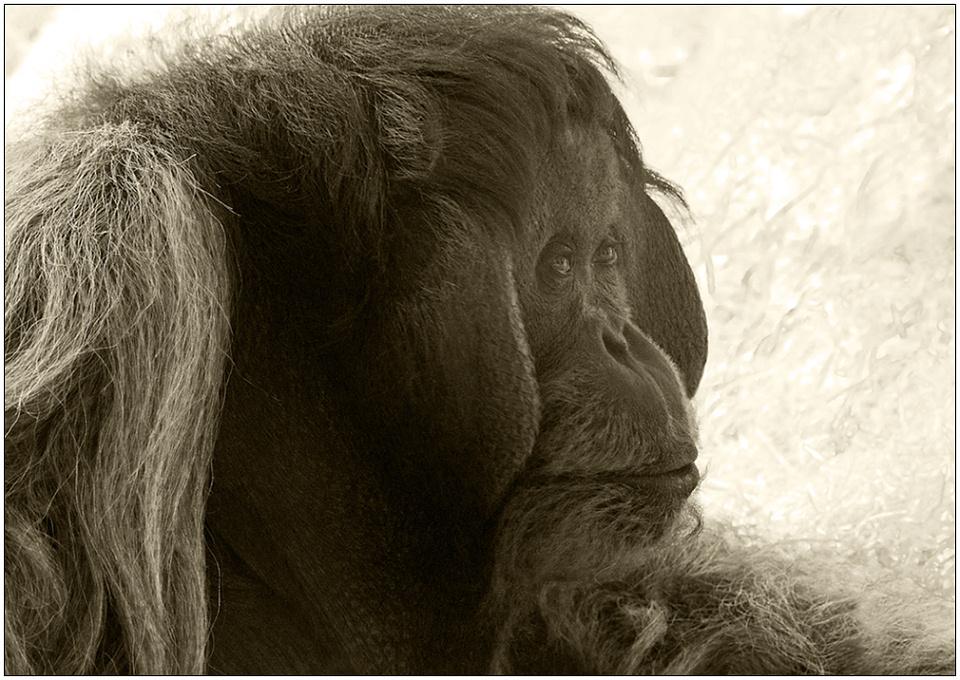"photo ""Vladimir Vensky"" tags: nature, black&white, wild animals"