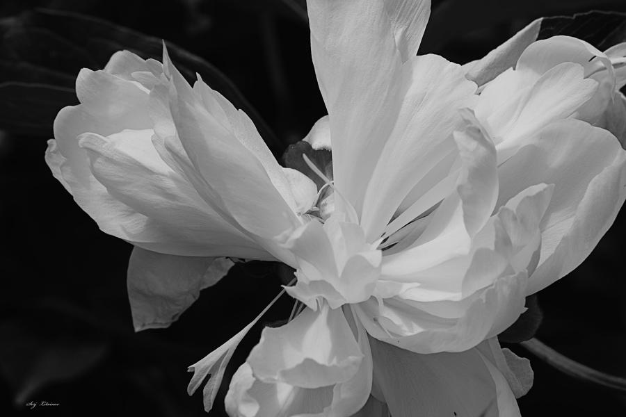 """фото """"Танец в черно белом"""" метки: природа,"""