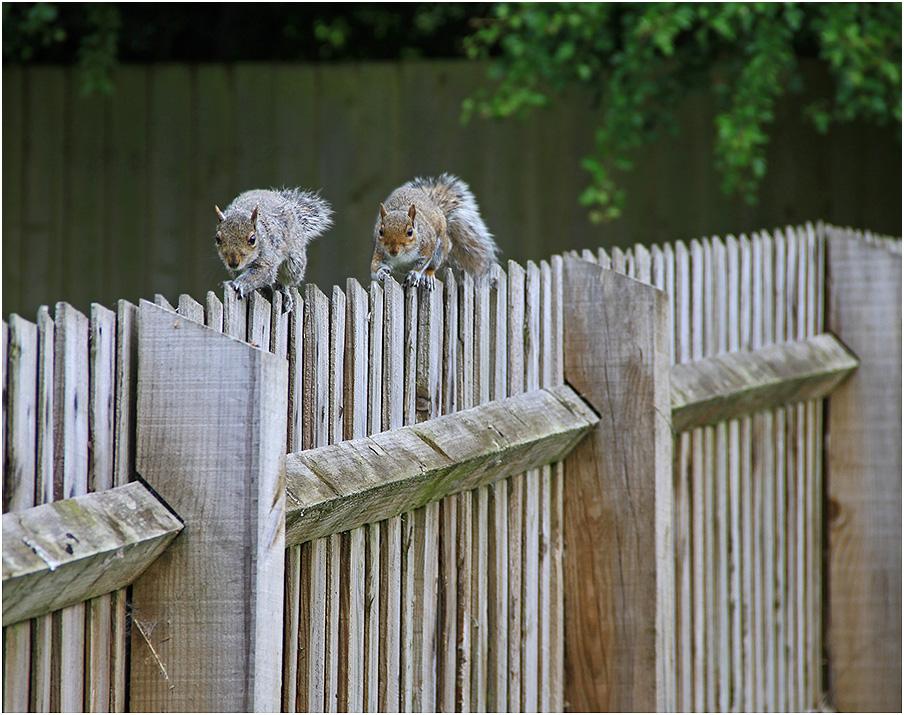 """фото """"В гости на орехи!"""" метки: природа, репортаж, дикие животные"""