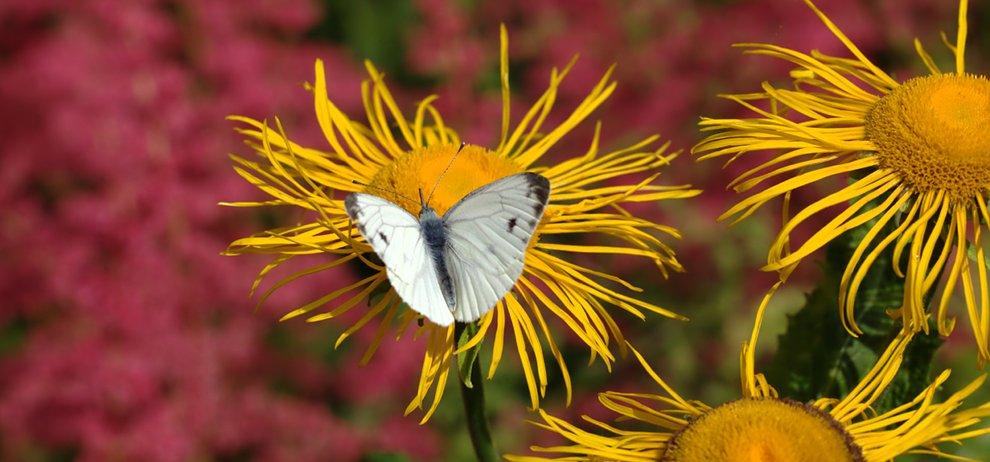 "фото ""***"" метки: природа, насекомое"