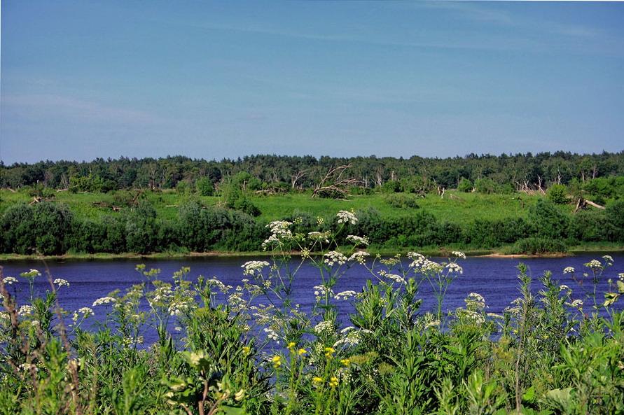 """фото """"река да цветы"""" метки: пейзаж, путешествия, лето"""