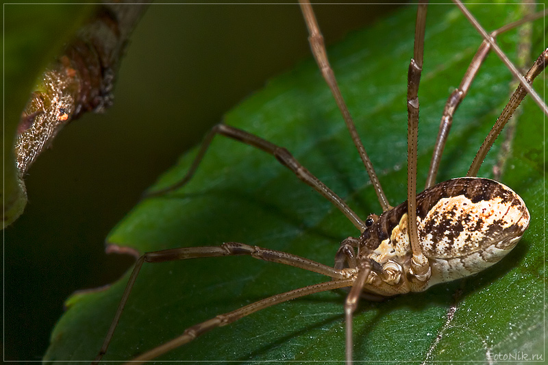 """photo """"Eye to eye"""" tags: nature, misc., insect"""
