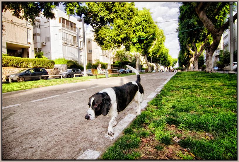 """фото """"Tel-Aviv 6240"""" метки: пейзаж, город,"""