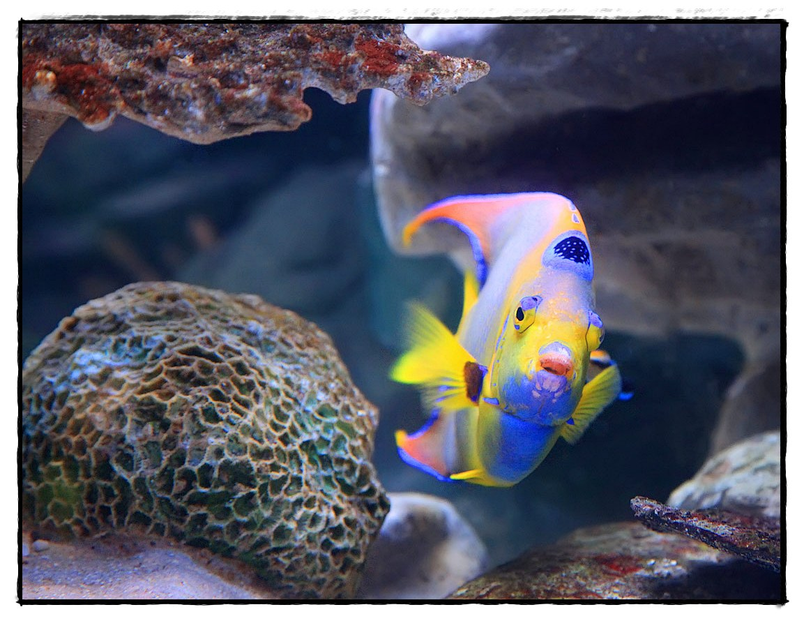 "photo ""fish"" tags: nature, underwater, wild animals"