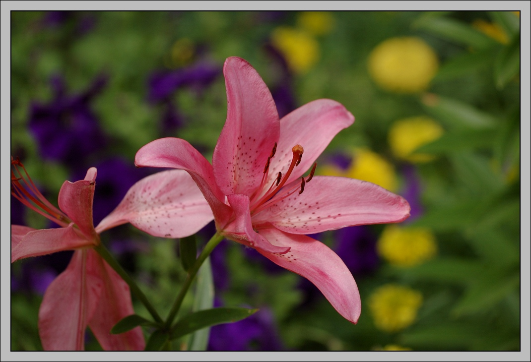 "photo ""Postcard with flower"" tags: nature, macro and close-up, flowers"