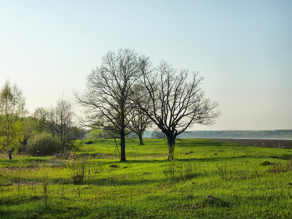 "photo ""Oak grove"" tags: landscape, forest, spring"