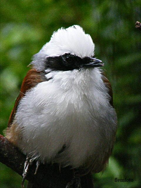 """photo """"Bird."""" tags: nature,"""