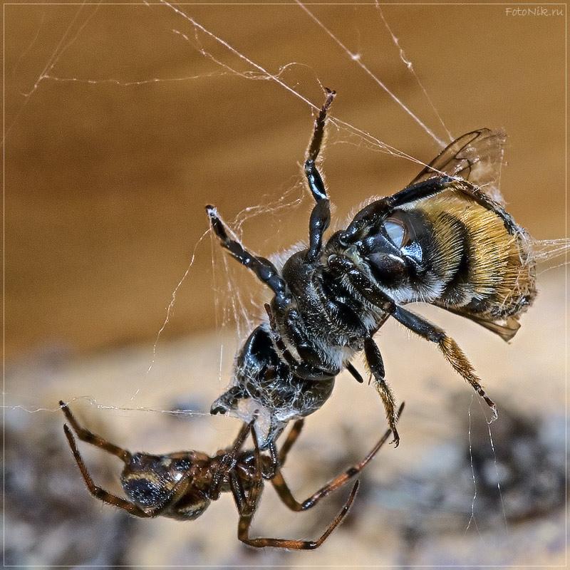 """фото """"Смертельная схватка"""" метки: природа, разное, насекомое"""
