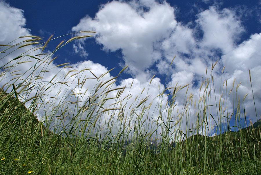 """фото """"Колосья"""" метки: пейзаж, горы, лето"""