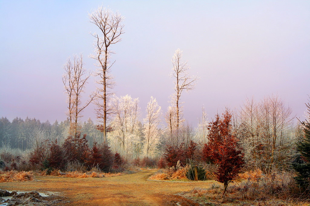 "фото ""На опушке"" метки: пейзаж, лес"
