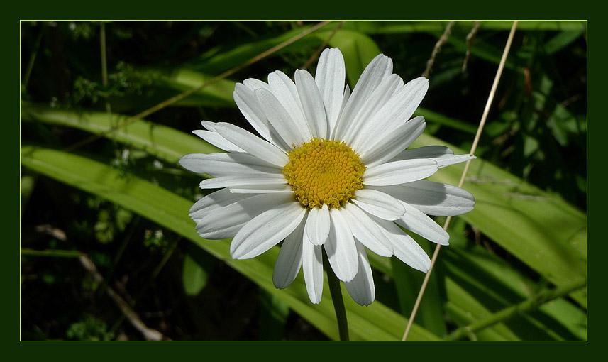 "photo ""White Princess"" tags: ,"