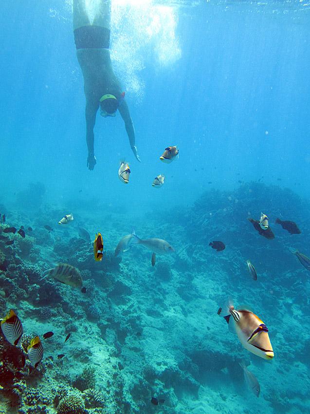 """фото """"Окунуться в рай"""" метки: подводные,"""