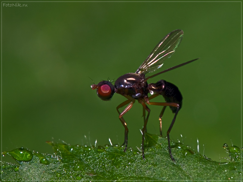 "photo ""5059"" tags: nature, misc., insect"