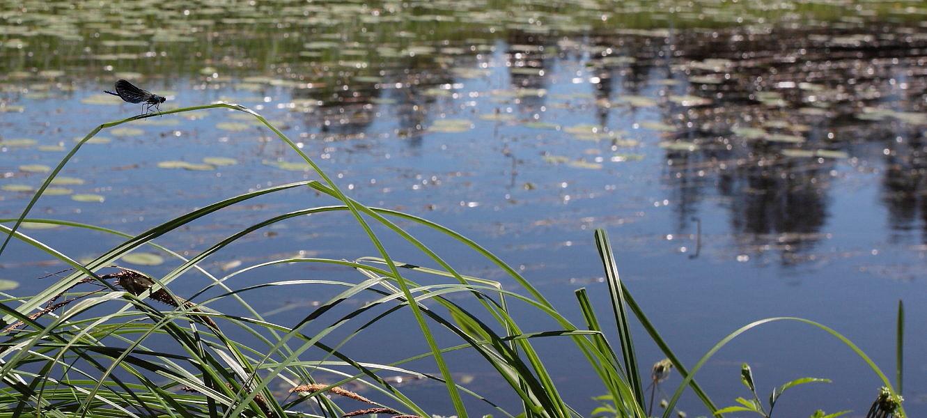 """фото """"Рождение стрекозы... или все реки текут..."""" метки: пейзаж, вода"""