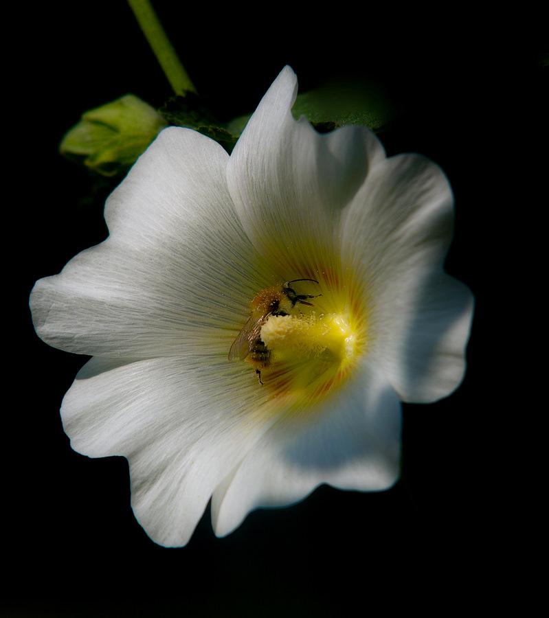 """фото """"фарфоровый"""" метки: природа, цветы"""