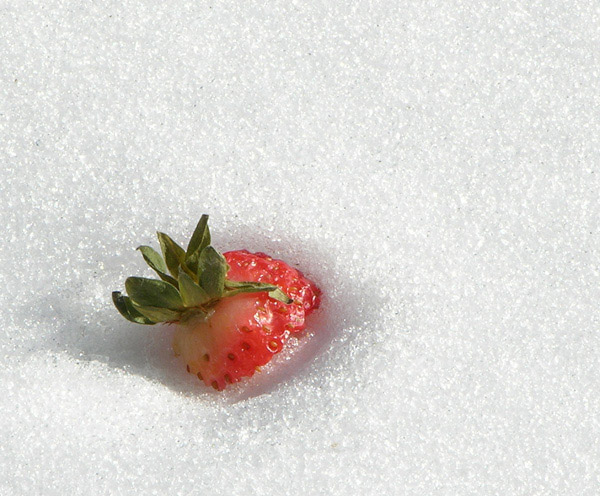 """фото """"Chilled Fruit"""" метки: разное,"""