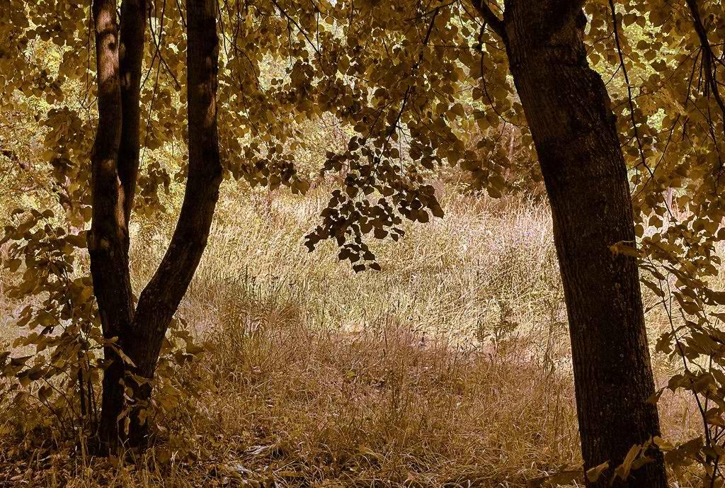 """фото """"Пожарное настроение"""" метки: пейзаж,"""