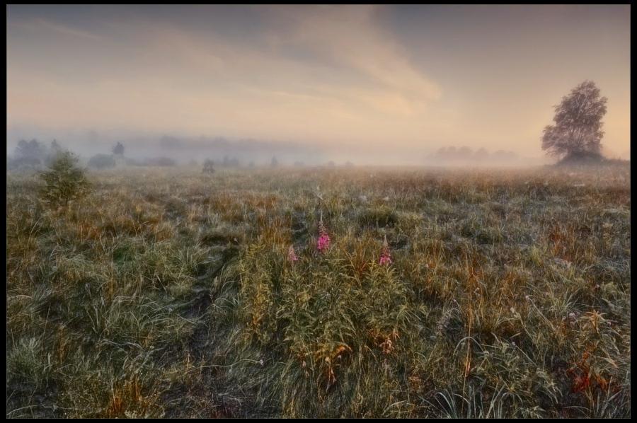 """фото """"В тумане"""" метки: ,"""