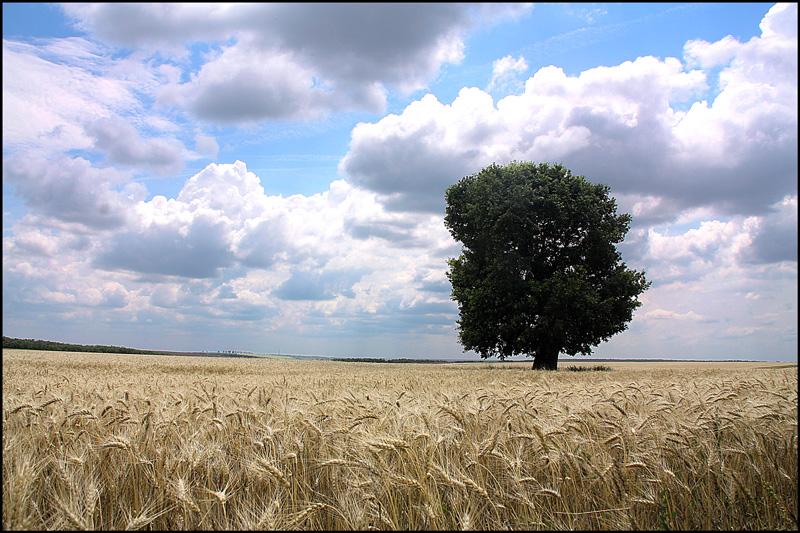 "фото ""Lost oak / Потерянный дуб"" метки: пейзаж, природа, лето"