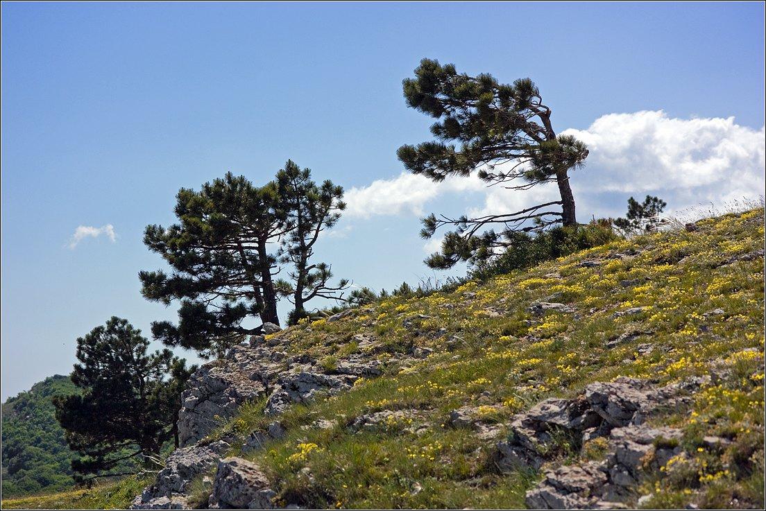 """фото """"***"""" метки: пейзаж, Крым, горы, лето"""