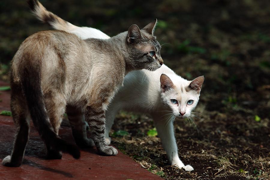"""фото """"Жители Последнего переулка"""" метки: природа, дикие животные, домашние животные"""
