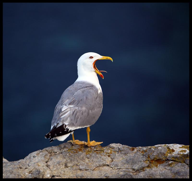 """фото """"Shut-up..."""" метки: природа, дикие животные"""
