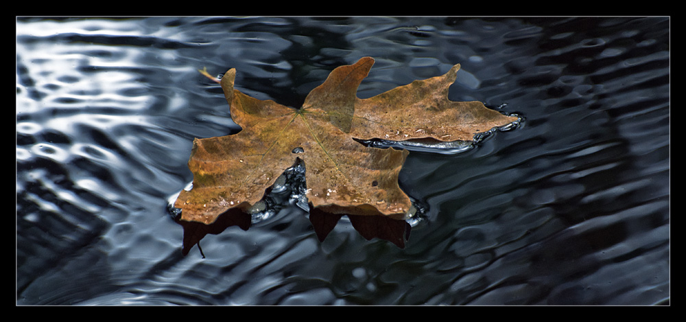 """photo """"Maple leaf"""" tags: nature, abstract, flowers"""