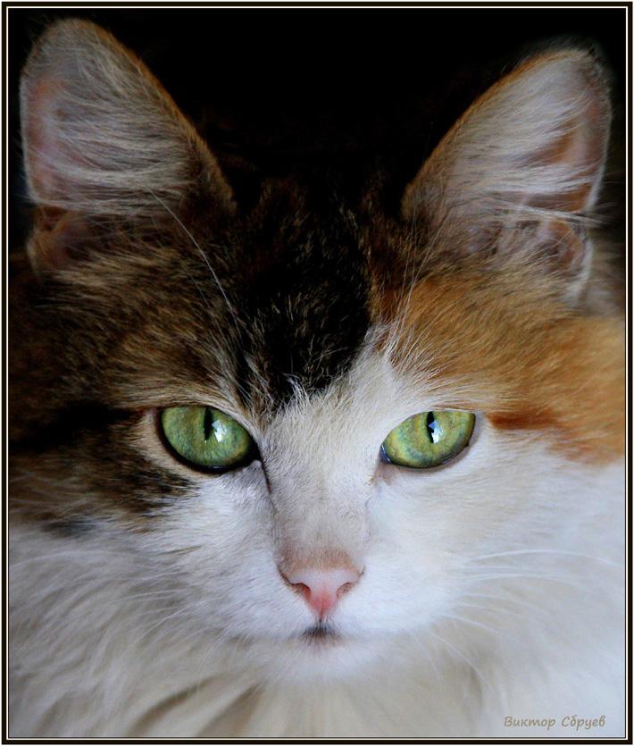 """фото """"Случайный портрет"""" метки: природа, домашние животные"""