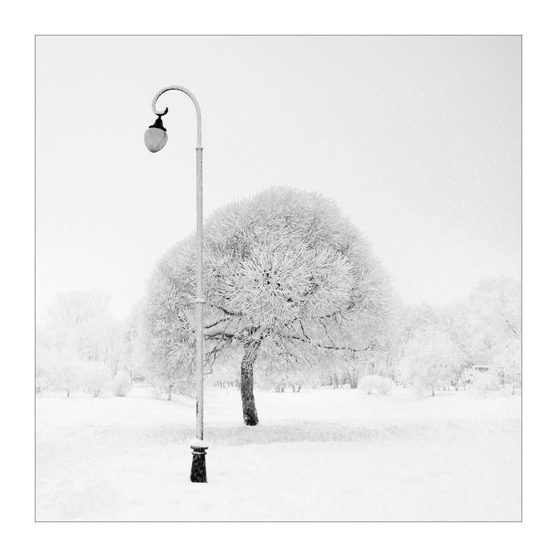 "photo ""Белый танец. Дамы приглашают кавалеров."" tags: landscape, winter"