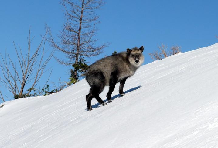 """фото """"Встреча в горах."""" метки: природа, путешествия, Азия, дикие животные"""