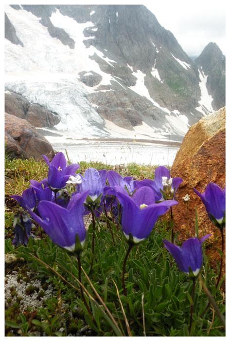 """фото """"Горцы"""" метки: природа, цветы"""