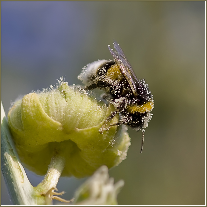 "photo ""Working!!"" tags: nature, macro and close-up, insect"