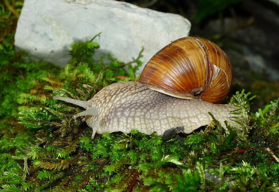 "photo ""Snail"" tags: nature,"