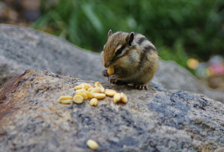"""фото """"Эх, щеки маленькие."""" метки: природа, дикие животные"""