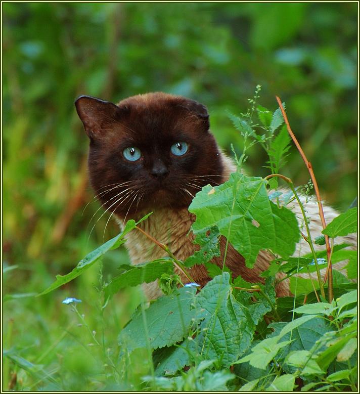 """фото """"Застигнутый врасплох"""" метки: природа, домашние животные"""