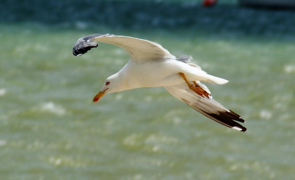 "фото ""Galeb"" метки: природа, дикие животные"