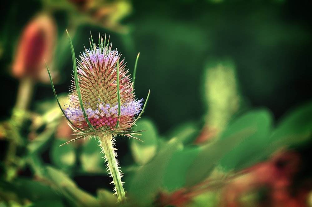 """фото """"Ёжик в цветном тумане...."""" метки: природа, цветы"""