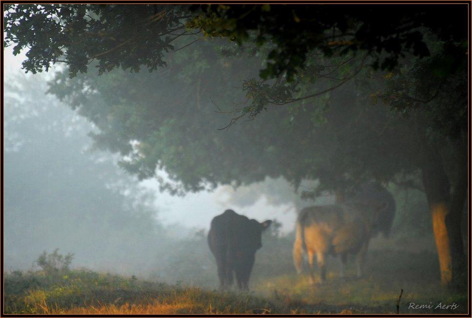 "photo ""***"" tags: landscape, nature, pets/farm animals, summer"