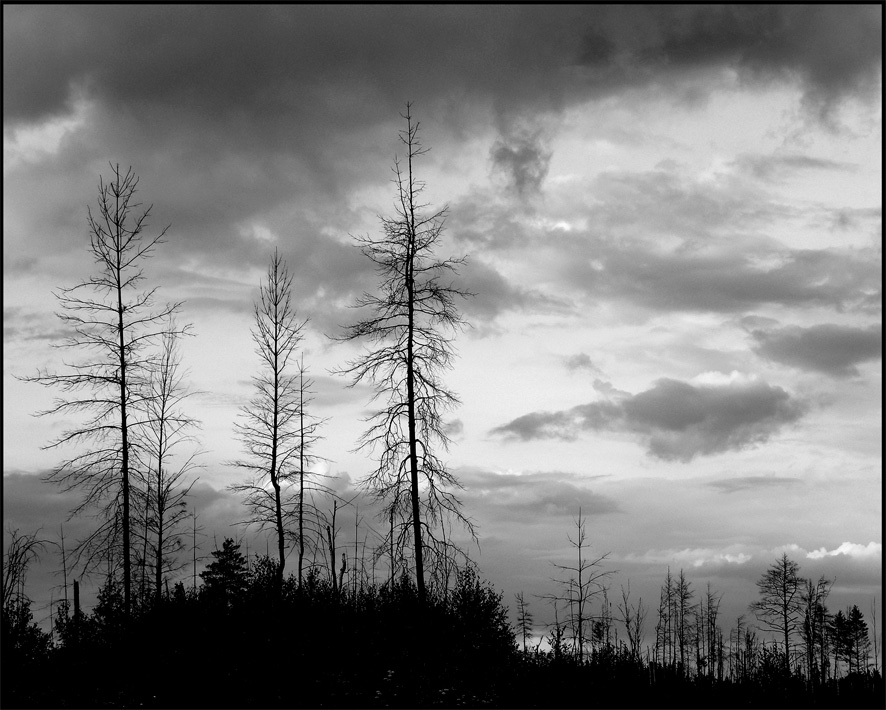 "photo ""Silhouettes"" tags: landscape, black&white, forest"