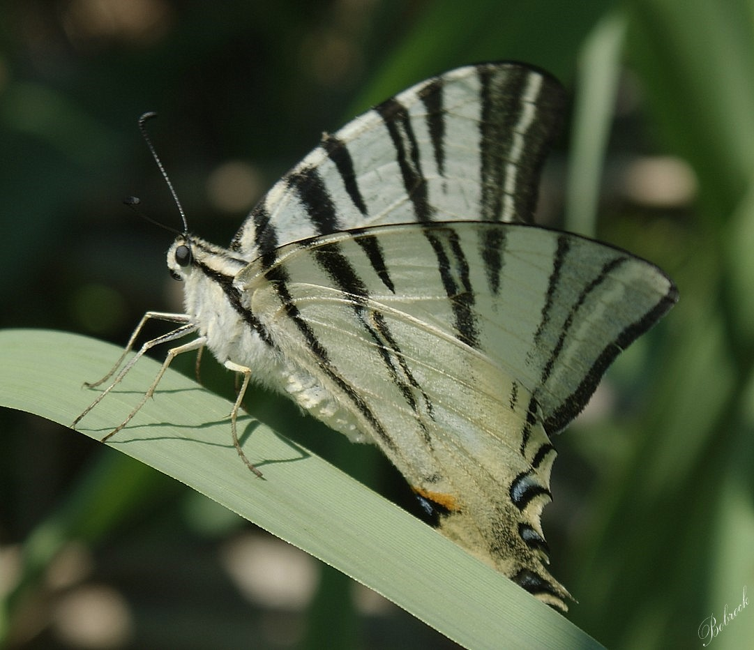 "photo ""Butterfly"" tags: nature, wild animals"