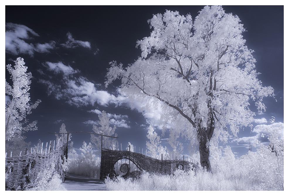 "фото ""White dream"" метки: пейзаж,"