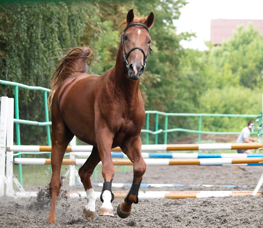 "photo ""***"" tags: sport, nature, pets/farm animals"