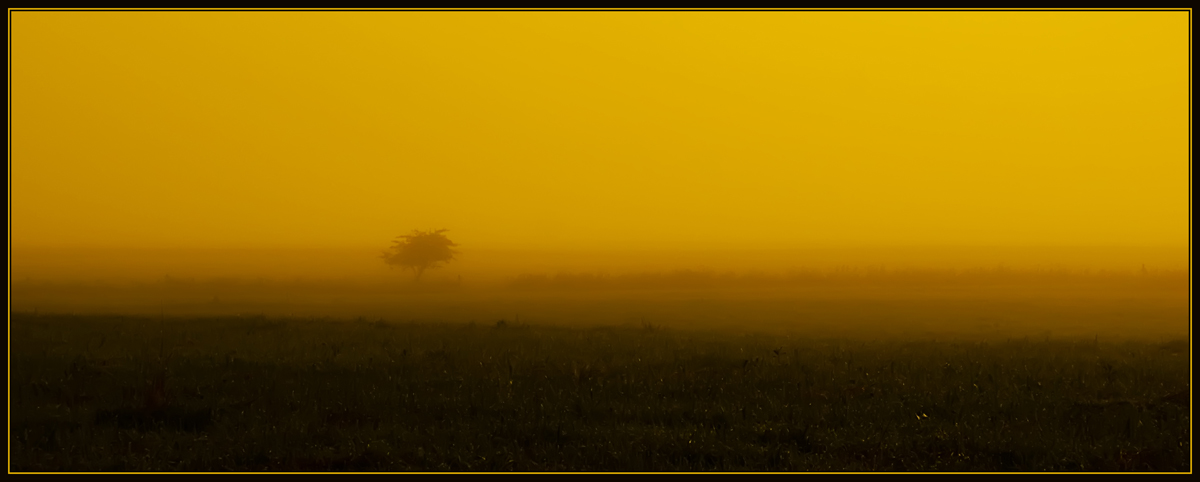 "photo ""Loneliness in the mist"" tags: misc.,"