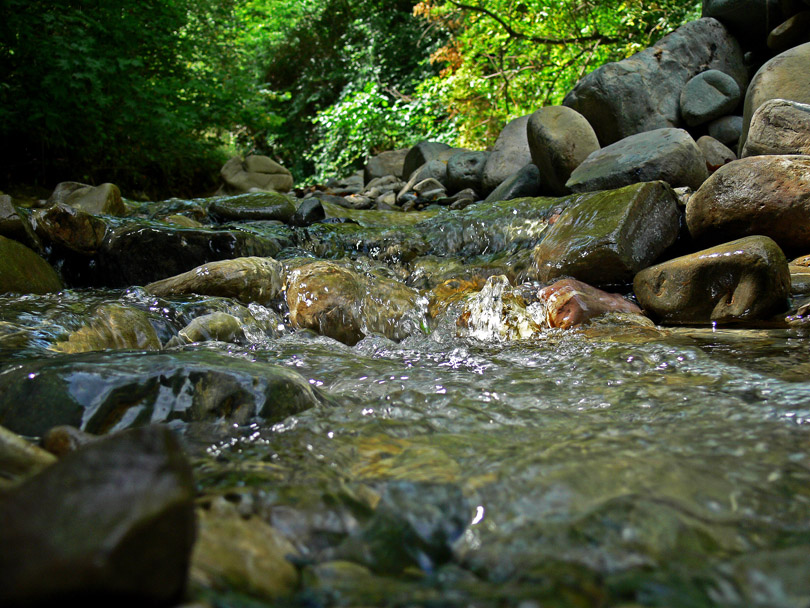 "photo ""Forest Creek Georgia"" tags: landscape, forest, water"