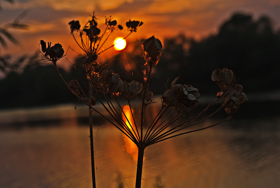 "photo ""***"" tags: landscape, nature, flowers, sunset"